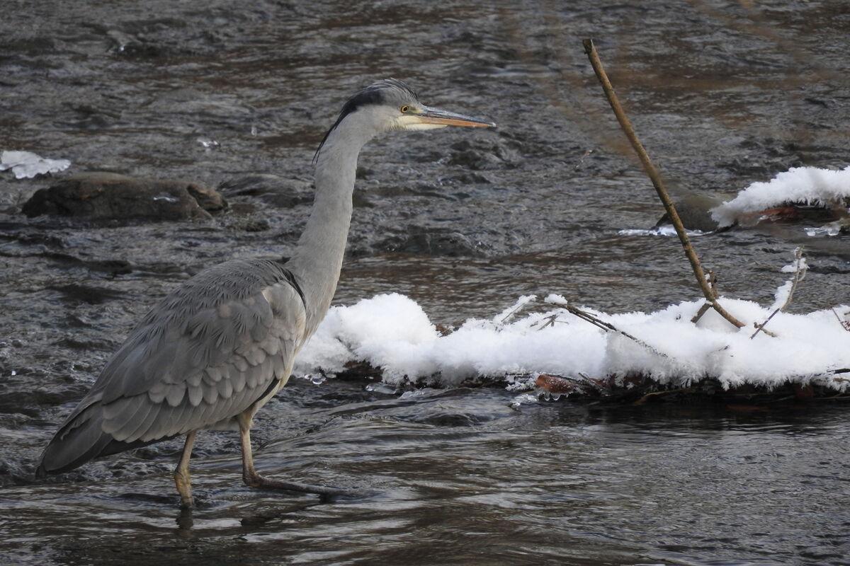 S enbacher naturfisch areal for Teichfische verkauf